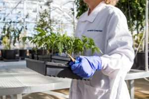 Plant research at New Mexico Consortium Greenhouse