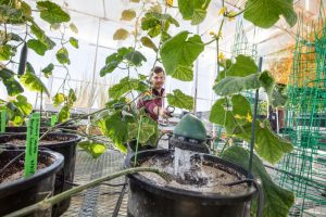 UbiQD plant biology research at New Mexico Consortium Greenhouse