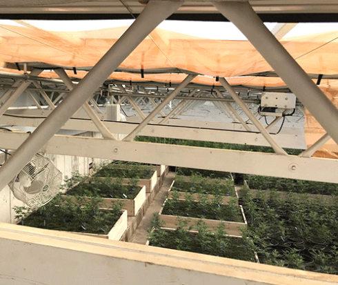 NMC Plant Biology Research Los Alamos
