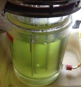 Biofuel algae